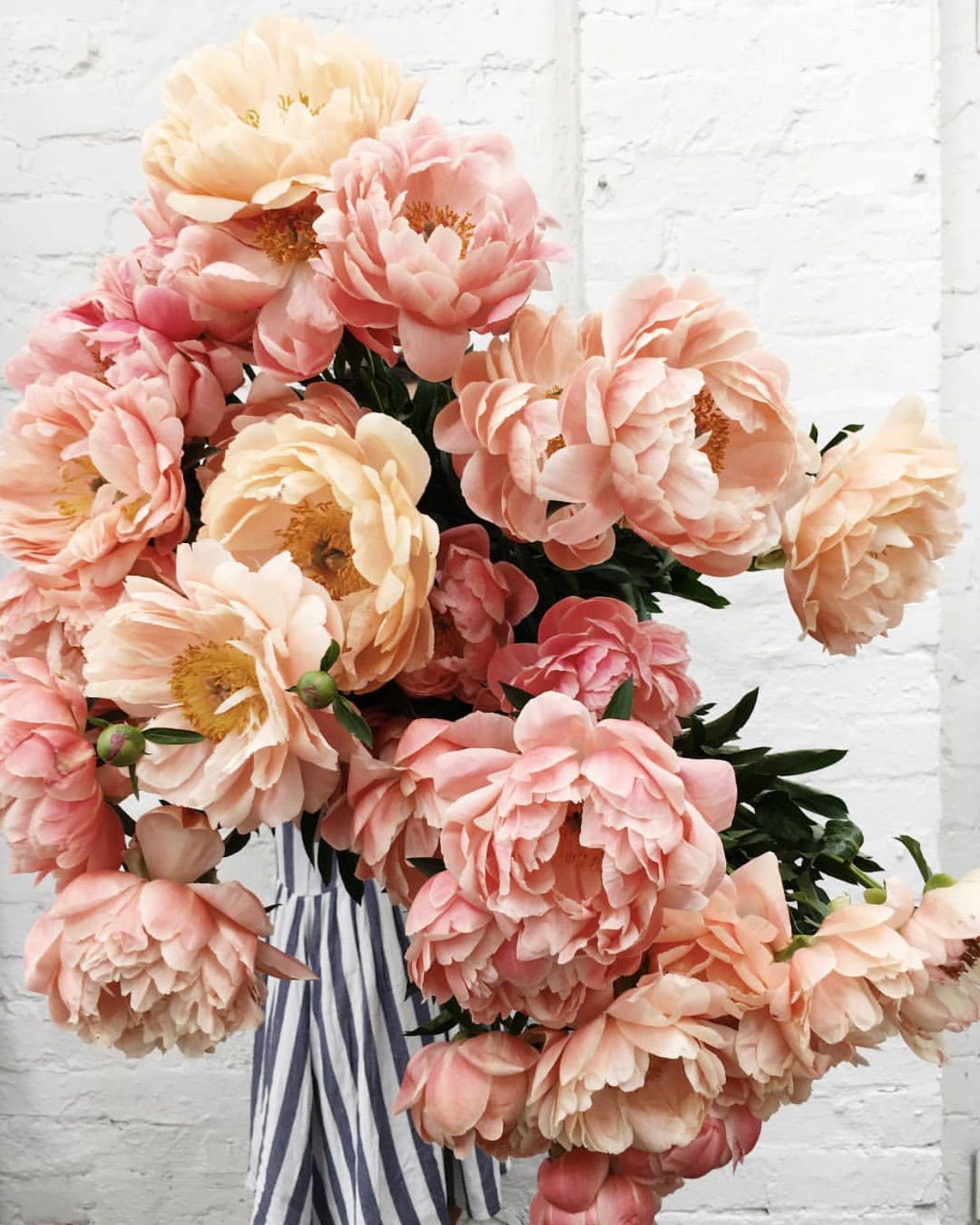 Coral charm peonies from Evelina Florence Flowers